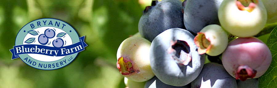 Bryant Blueberries Blog