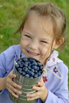 Bryant Blueberry Farm Arlington WA