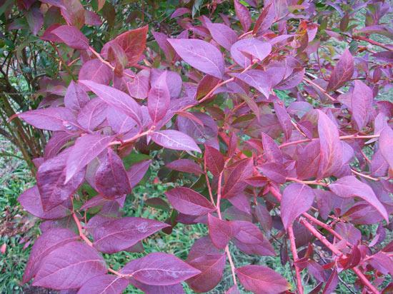 grow-berries-bryant-blueberry-farm-5