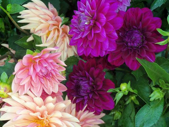 U-Pick-Flowers Bryant Blueberry Farm