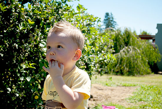 family-fun-and-festivals-children-enjoy-picking-bryant-blueberry-2