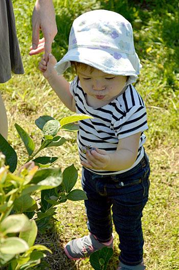 u-pic-we-pick-current-seasonal-hours-bryant-blueberry